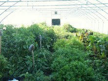 hoop house inside